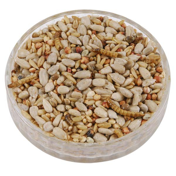 Bird Feeder Mix