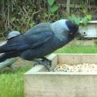 Ark Classic Wild Bird Food