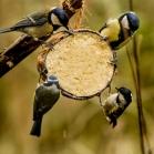 Coconut Bird Feeder - Mixed