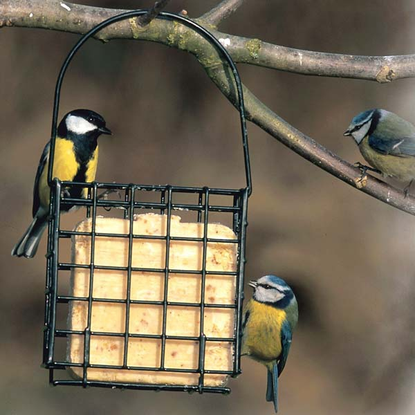 Suet Bird Feeders