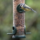 Bird Lovers Seed Feeder