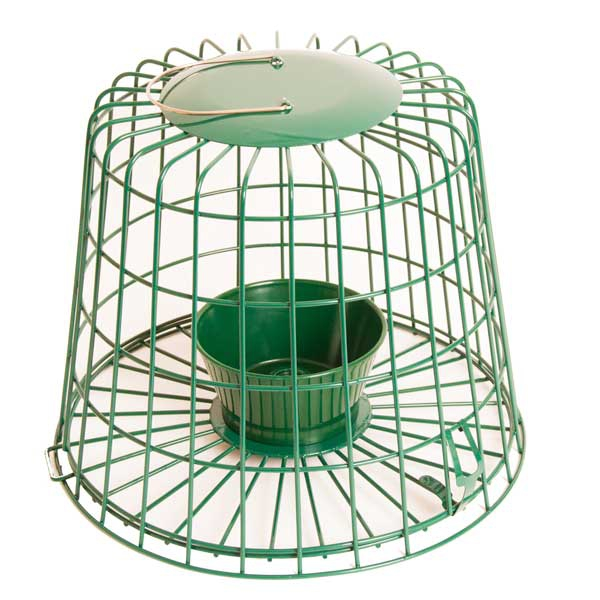 Pigeon Proof Bird Feeders