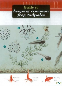 Field Guide to Keeping Frog Tadpoles