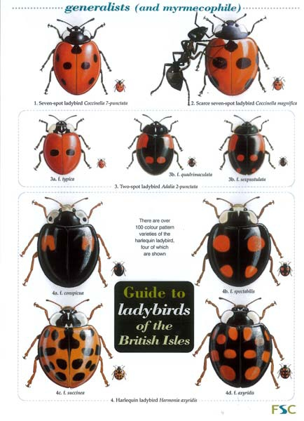 Field Guide to Ladybirds