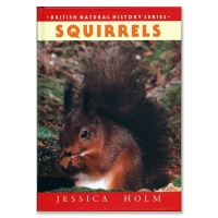 Squirrels By Jessica Holm