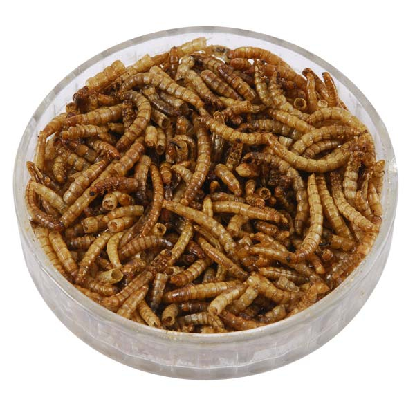 Mealworms for Birds