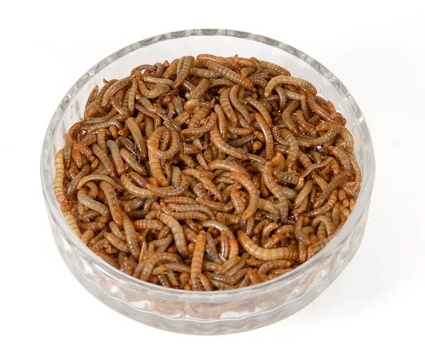 Live Mini Mealworms