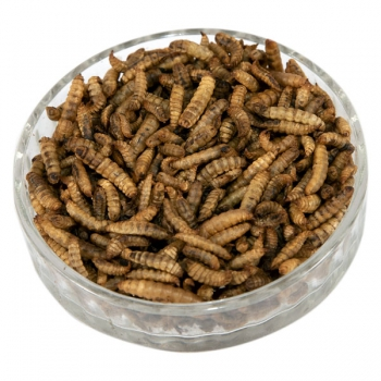 Dried Calcium Worms