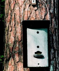 Schwegler 1FS Large Colony Bat Box