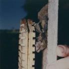 Schwegler 2F DFP Bat Box With Double Front Panel