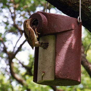 Schwegler 3SV Nuthatch Nestbox - 45mm