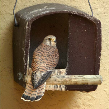 Schwegler No. 28 Kestrel Nestbox