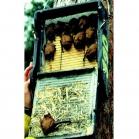 Schwegler 1FF Bat Box
