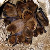 Schwegler 1FD Bat Box