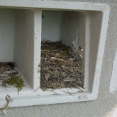 Schwegler 1SP Nest Box - Sparrow Terrace - Brown