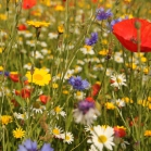 Wildflower Corner Seed Mix Collection Pack