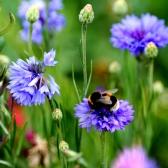 Ark Wildflower Seed Mixes