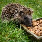 Ark Hedgehog Food Original