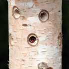 Ladybird/Beneficial Insect Tower with Pole