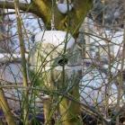Schwegler 1ZA Wren Round House Ivy
