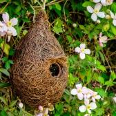 Giant Roost Nest Pocket