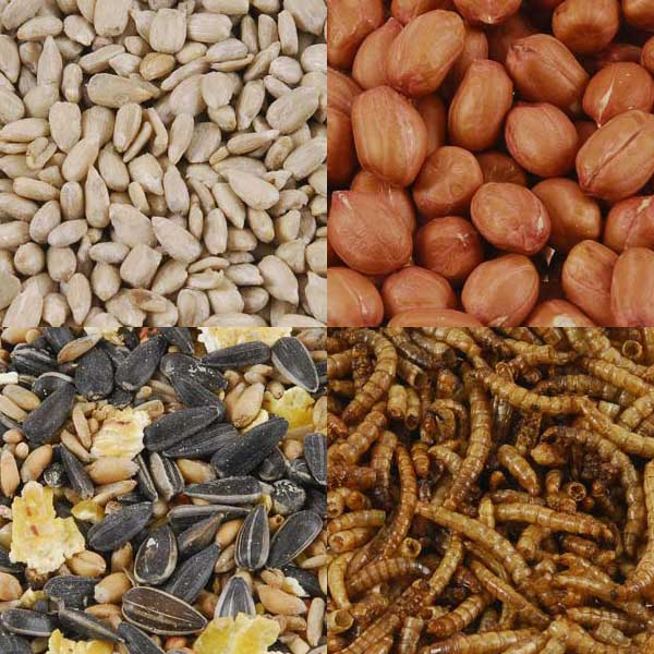Bird Food Value Packs