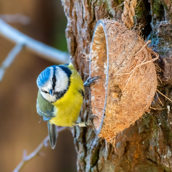 Essential Bird & Wildlife Feeding Supplies